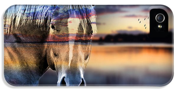 Horse 6 IPhone 5 Case by Mark Ashkenazi