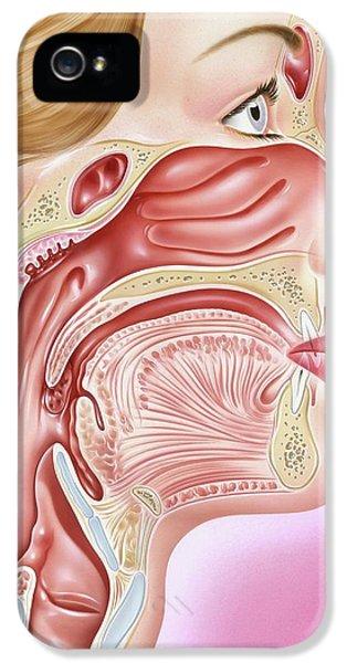 Human Head Anatomy IPhone 5 Case