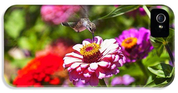 Hummingbird Flight IPhone 5 Case by Garry Gay