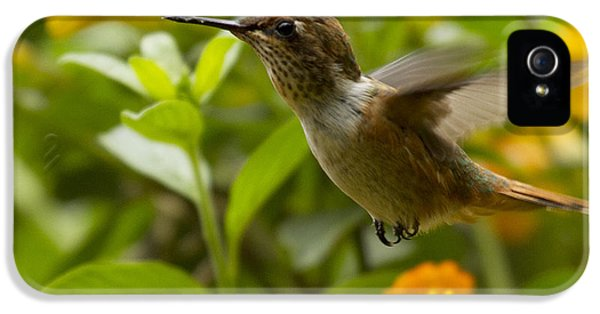 Hummingbird Looking For Food IPhone 5 Case by Heiko Koehrer-Wagner