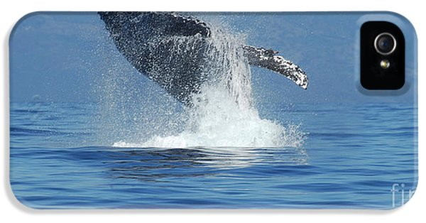 Whale iPhone 5 Cases - Humpback Whale Breaching iPhone 5 Case by Bob Christopher