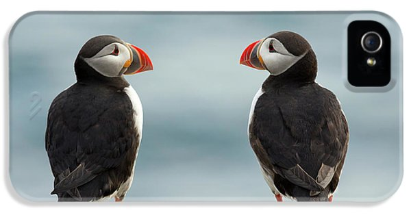 Puffin iPhone 5 Case - I Love You - I Love You Too by Milan Zygmunt