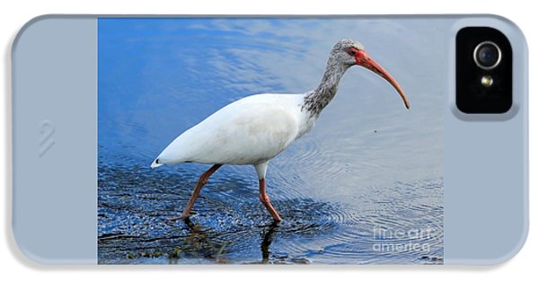 Ibis Visitor IPhone 5 Case by Carol Groenen