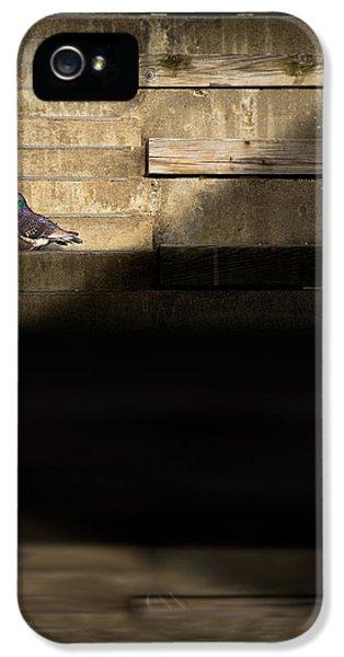 Il Piccolo Guardiano IPhone 5 Case by Bob Orsillo