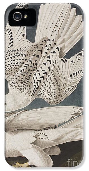 Illustration From Birds Of America IPhone 5 / 5s Case by John James Audubon