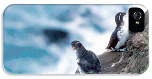 Auklets iPhone 5 Case - I'm Not Talking To You Either by F Hughes