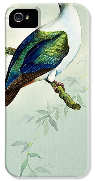 Imperial Fruit Pigeon IPhone 5 Case by Bert Illoss