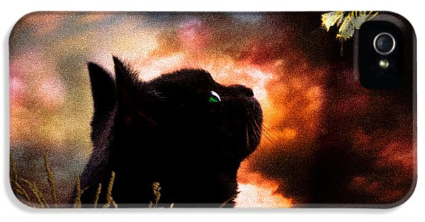 In A Cats Eye All Things Belong To Cats.  IPhone 5 Case