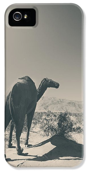 In The Hot Desert Sun IPhone 5 Case by Laurie Search