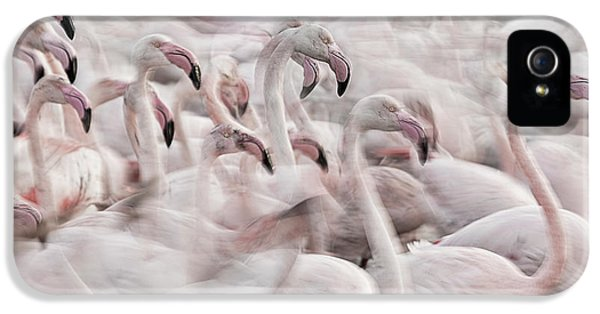 French iPhone 5 Case - In The Pink Transhumance by Martine Benezech