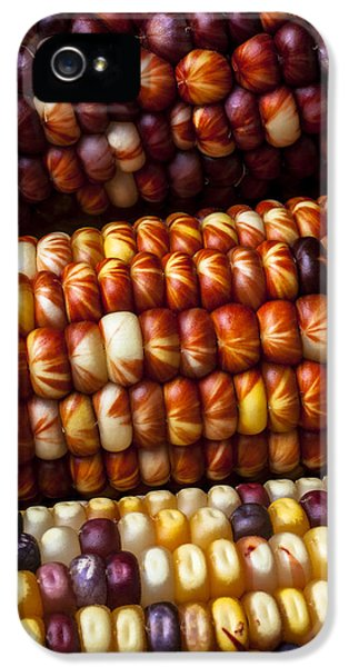 Indian Corn Harvest Time IPhone 5 Case by Garry Gay