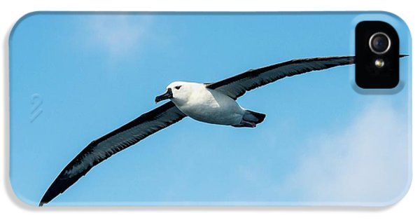 Indian Ocean Yellow-nosed Albatross IPhone 5 Case by Peter Chadwick