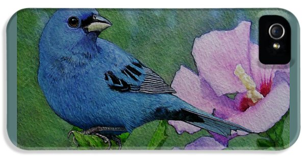 Indigo Bunting No 1 IPhone 5 / 5s Case by Ken Everett