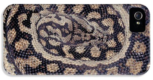 Inland Carpet Python  IPhone 5 / 5s Case by Karl H Switak