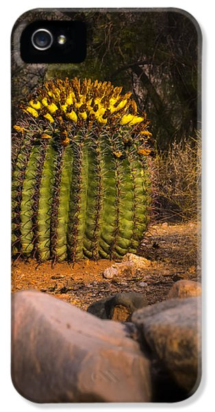 IPhone 5 Case featuring the photograph Into The Prickly Barrel by Mark Myhaver