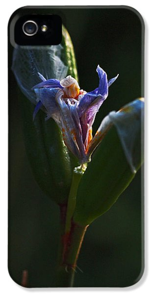 Iris Emerging  IPhone 5 Case by Rona Black