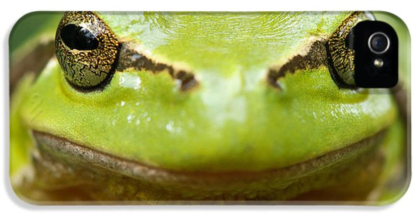 It's Not Easy Being Green _ Tree Frog Portrait IPhone 5 Case by Roeselien Raimond