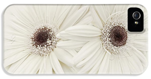 Ivory Gerber Daisy Flowers IPhone 5 Case by Jennie Marie Schell