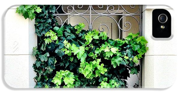 Green iPhone 5 Case - Ivy by Julie Gebhardt