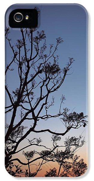 Jacaranda Sunset IPhone 5 Case