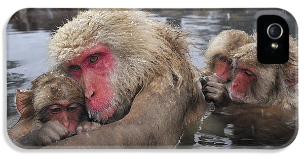 Japanese Macaque Grooming Mother IPhone 5 Case by Thomas Marent
