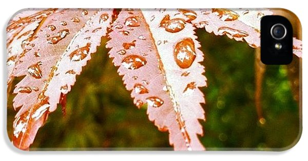 Japanese Maple Leaves IPhone 5 Case