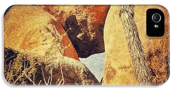 Sunny iPhone 5 Case - Joshua Tree Np by Jill Battaglia