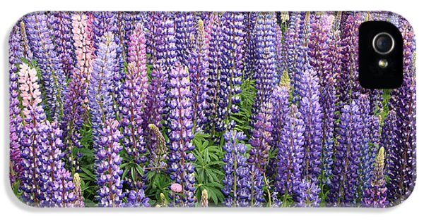 IPhone 5 Case featuring the photograph Just Lupins by Nareeta Martin