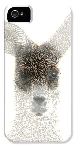Kangaroo iPhone 5 Case - Kangaroo by Holly Kempe