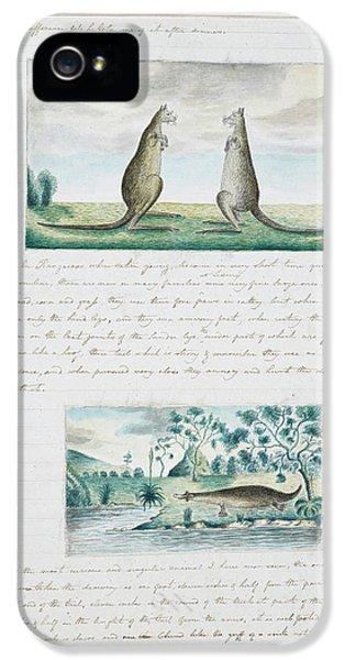 Kangaroo iPhone 5 Case - Kangaroos And Platypus by British Library