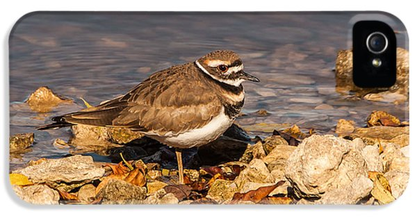 Kildeer On The Rocks IPhone 5 Case by Robert Frederick