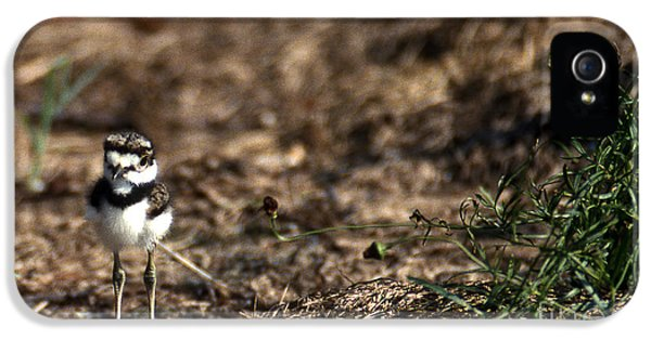 Killdeer iPhone 5 Case - Killdeer Chick by Skip Willits