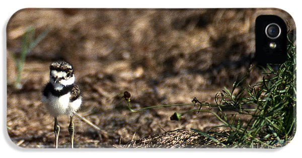 Killdeer Chick IPhone 5 Case by Skip Willits