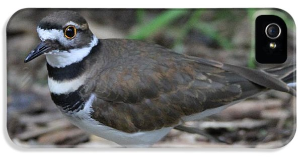 Killdeer iPhone 5 Case - Killdeer by Dan Sproul