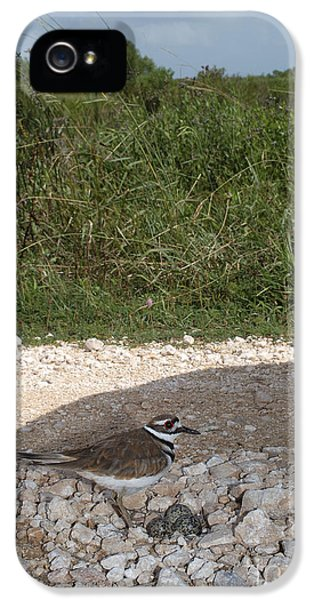 Killdeer Defending Nest IPhone 5 Case by Gregory G. Dimijian