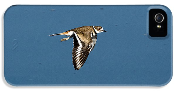 Killdeer In Flight IPhone 5 Case by Anthony Mercieca