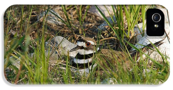 Killdeer iPhone 5 Case - Killdeer by Linda Freshwaters Arndt