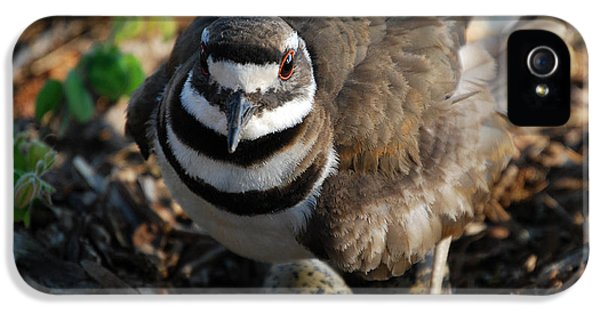 Killdeer iPhone 5 Case - Killdeer Mom by Skip Willits