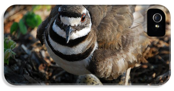 Killdeer Mom IPhone 5 Case by Skip Willits