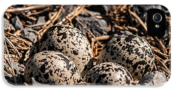 Killdeer Nest IPhone 5 Case by Lara Ellis