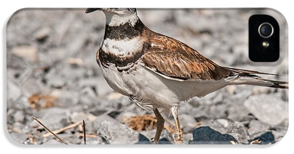 Killdeer iPhone 5 Case - Killdeer Nesting by Lara Ellis