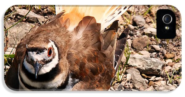 Killdeer On Its Nest IPhone 5 Case by Chris Flees