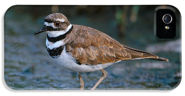 Killdeer IPhone 5 Case by Paul J. Fusco