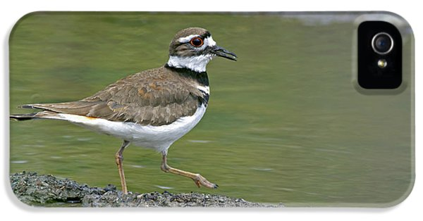 Killdeer Walking IPhone 5 Case by Sharon Talson