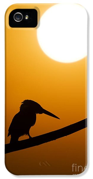 Kingfisher Sunset Silhouette IPhone 5 Case