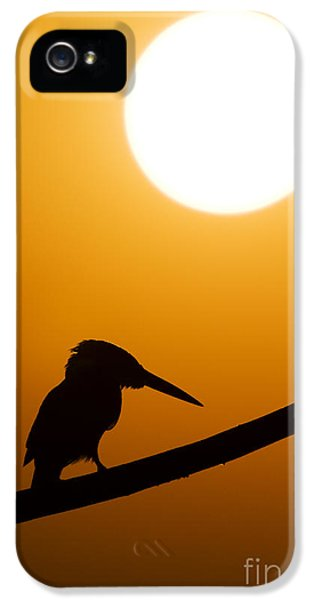 Kingfisher Sunset Silhouette IPhone 5 Case by Tim Gainey