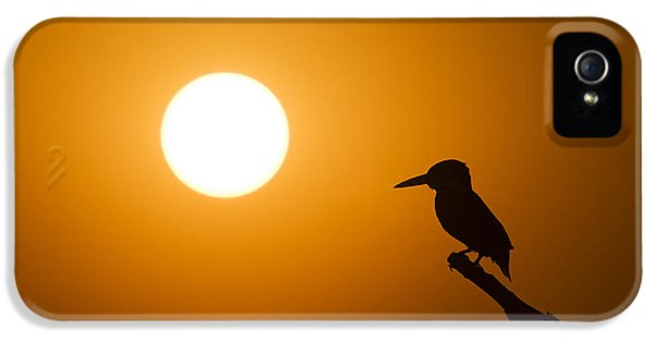 Kingfisher Sunset IPhone 5 Case by Tim Gainey