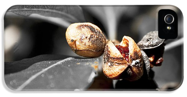 IPhone 5 Case featuring the photograph Knew Seeds Of Complentation by Miroslava Jurcik