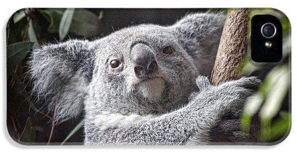 Koala iPhone 5 Case - Koala Bear by Tom Mc Nemar