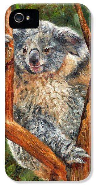 Koala iPhone 5 Case - Koala by David Stribbling